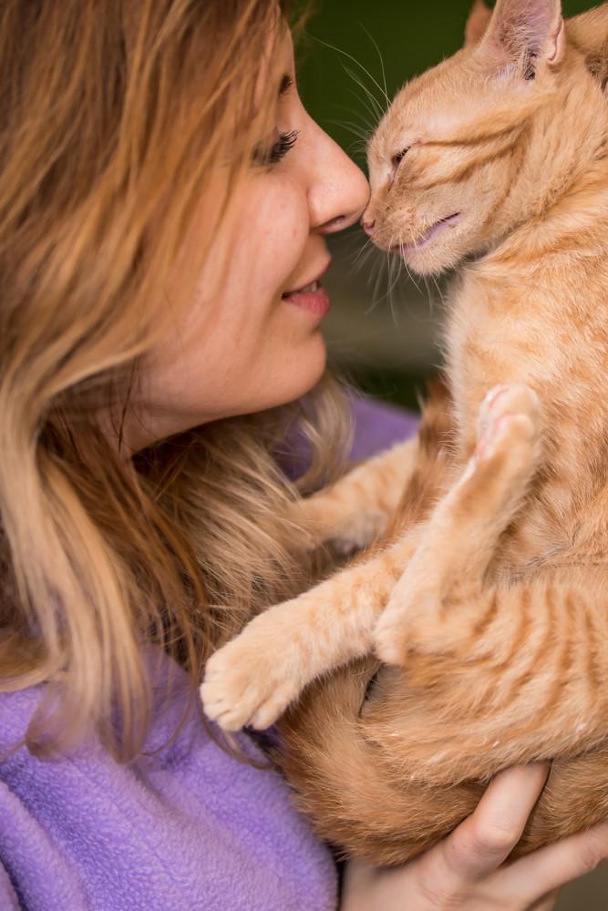 GINGER (Marley) - chat mâle né en septembre 2016 - CARMINA BUCAREST. Réservé adoption via une autre asso Ginger17