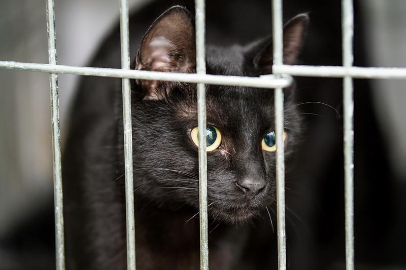 SERENA (Gato Nero) - chat femelle née en juin 2016 - CARMINA BUCAREST.  Réservée adoption via une autre asso Serena19
