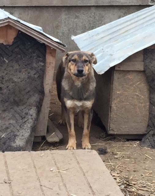 SHADOW -  mâle, croisé, de taille moyenne, né en mai 2016 - CARMINA BUCAREST Shadow11