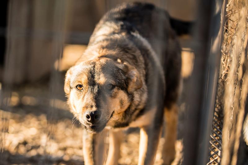 SHADOW -  mâle, croisé, de taille moyenne, né en mai 2016 - CARMINA BUCAREST Shadow19