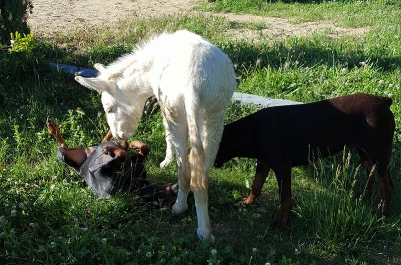 """Concours photos """"les compagnons de vos chevaux"""" gagnant Joël 214a10"""