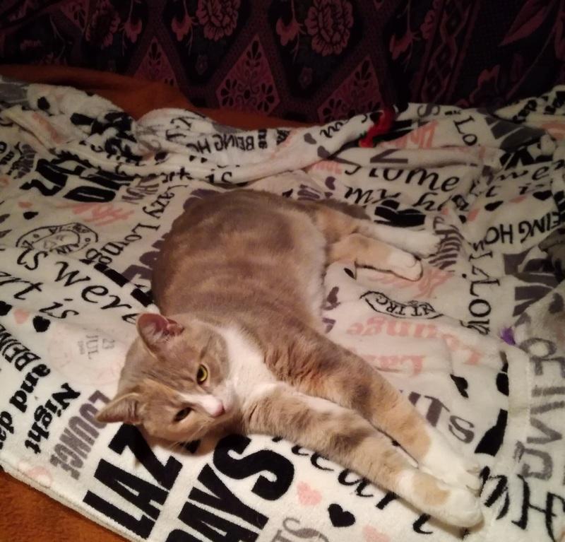 "MUSCADE, très belle chatte avec robe ""Isabelle"" de 7 mois Img_2010"