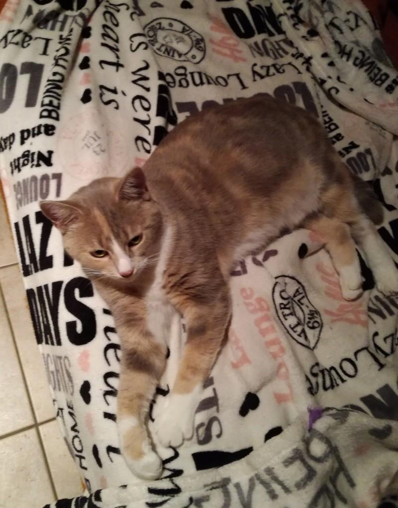 "MUSCADE, très belle chatte avec robe ""Isabelle"" de 7 mois Img_2011"