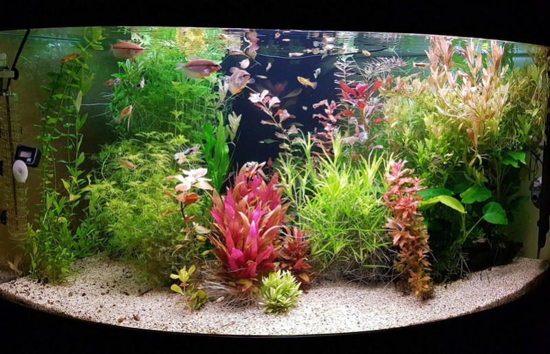 Mon aquarium , quel changement. Merci les amis du forum  !!! - Page 2 Aqua_a11