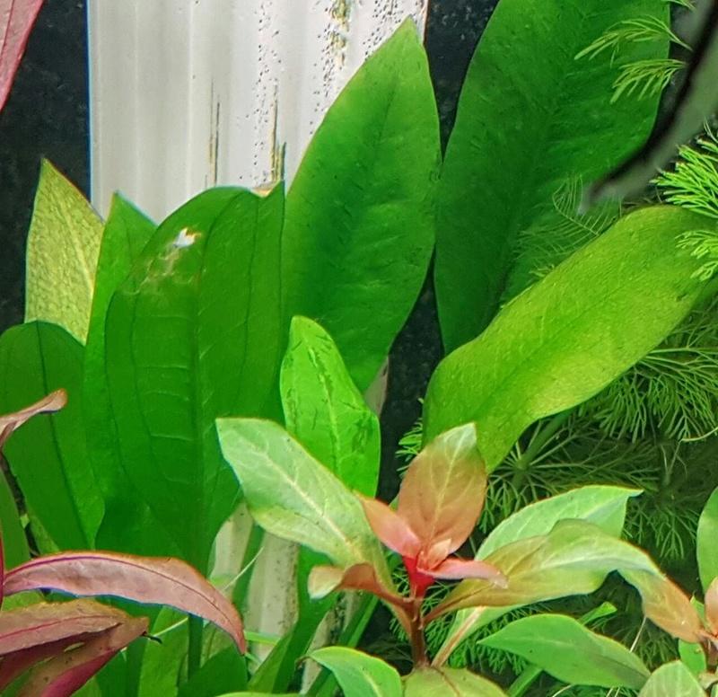 Plantes malades ou manque d'engrais ? Plante12