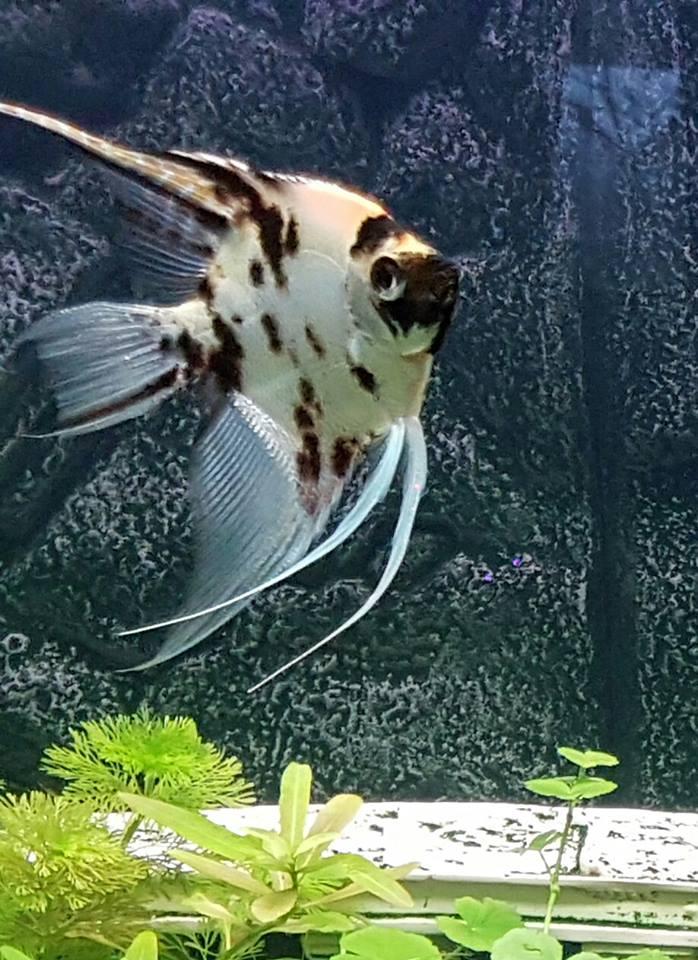 Identification poisson Scalai10