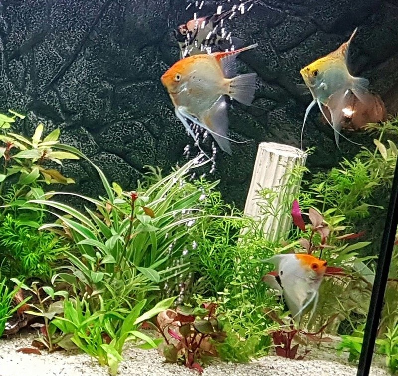 Identification poisson Scalai11