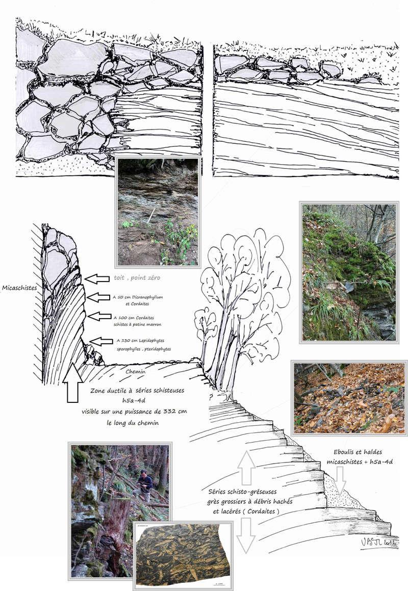 Flore Carbonifère des Alpes Françaises part 1 - Page 5 Coupe_10