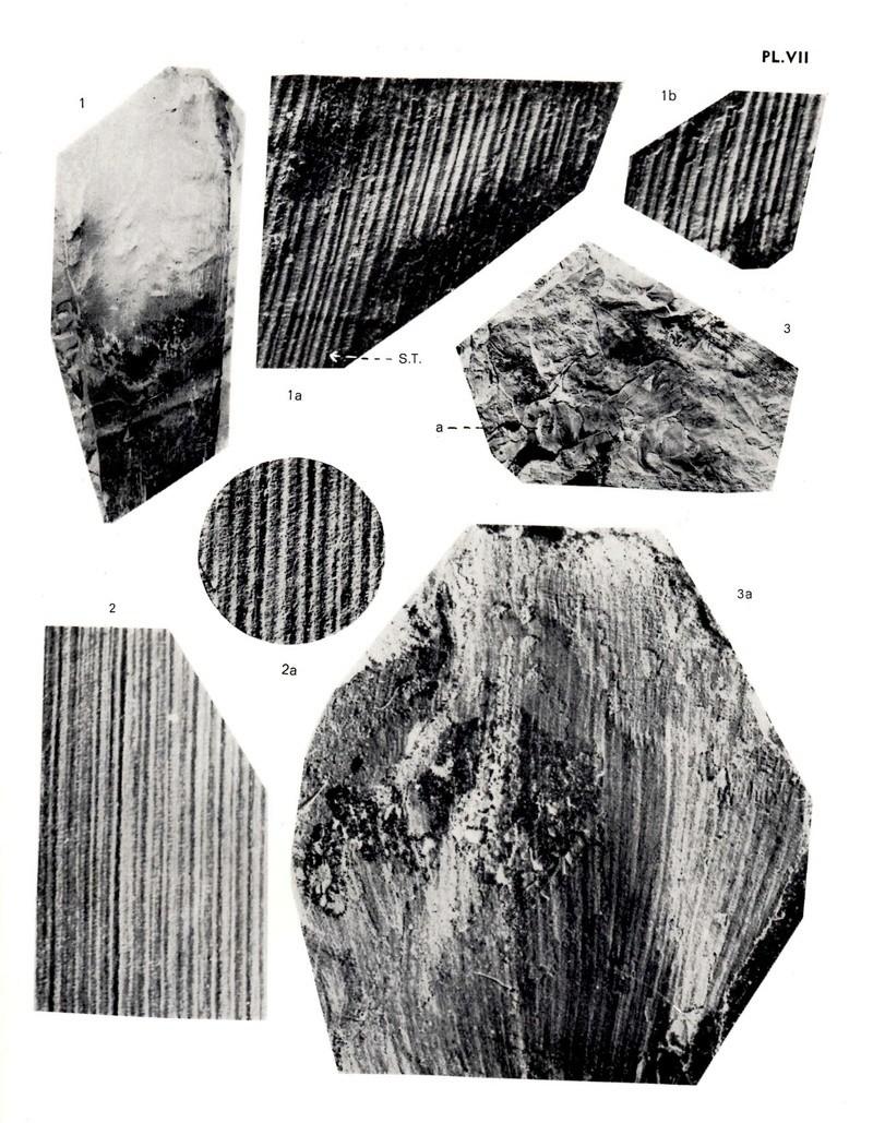 Flore Carbonifère des Alpes Françaises part 1 - Page 5 Img01010