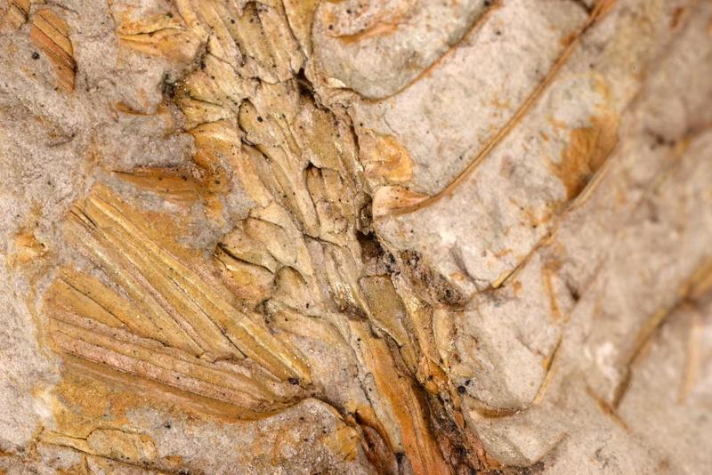 Flore Carbonifère des Alpes Françaises part 1 - Page 5 N3286510