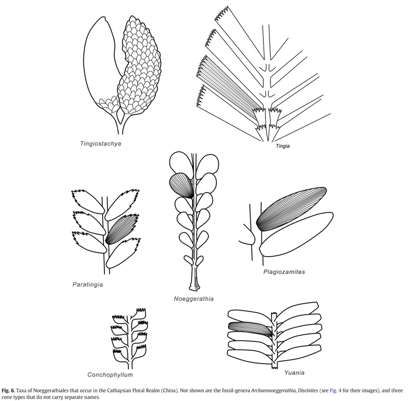 Flore Carbonifère des Alpes Françaises part 1 - Page 5 Pfeffe10