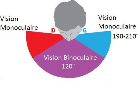 Présentation du masque DYE i5 7f9e5310