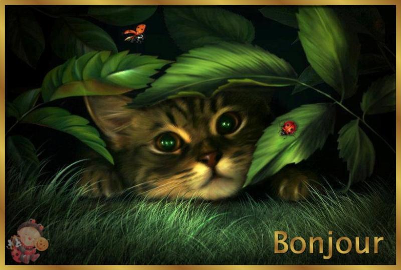 Bon Lundi Chat11