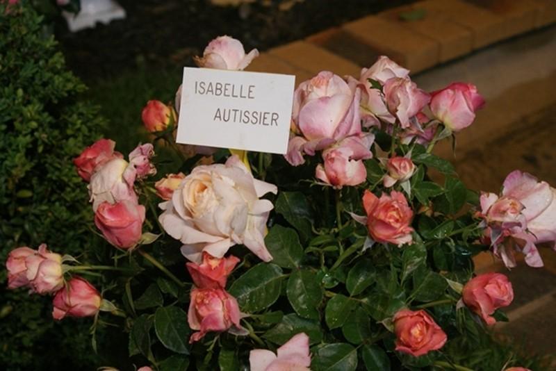 Les Journées de la rose (49 Doué la Fontaine) Dsc09210