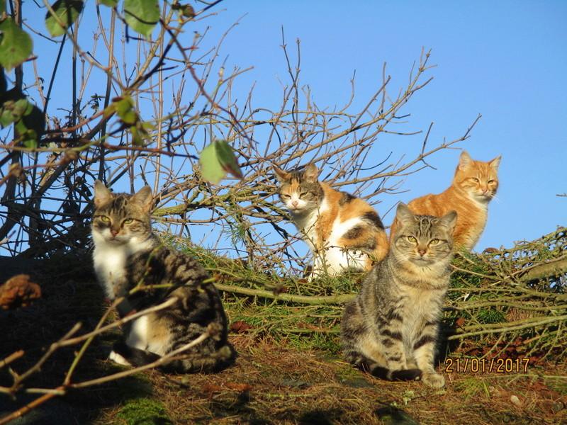 pour les amoureux des chats - Page 2 Img_2941