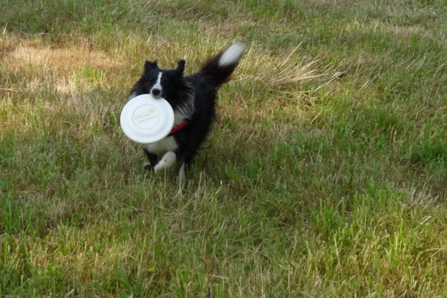 Engie fada de frisbee P1030311