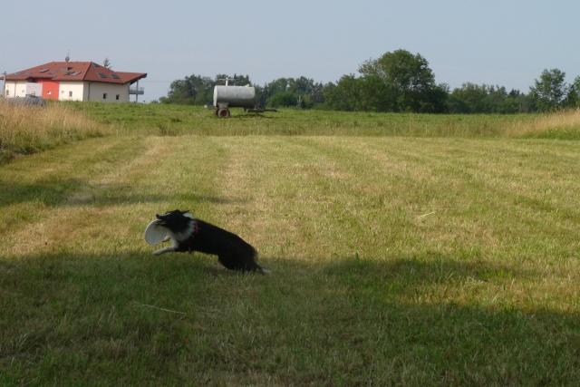 Engie fada de frisbee P1030318