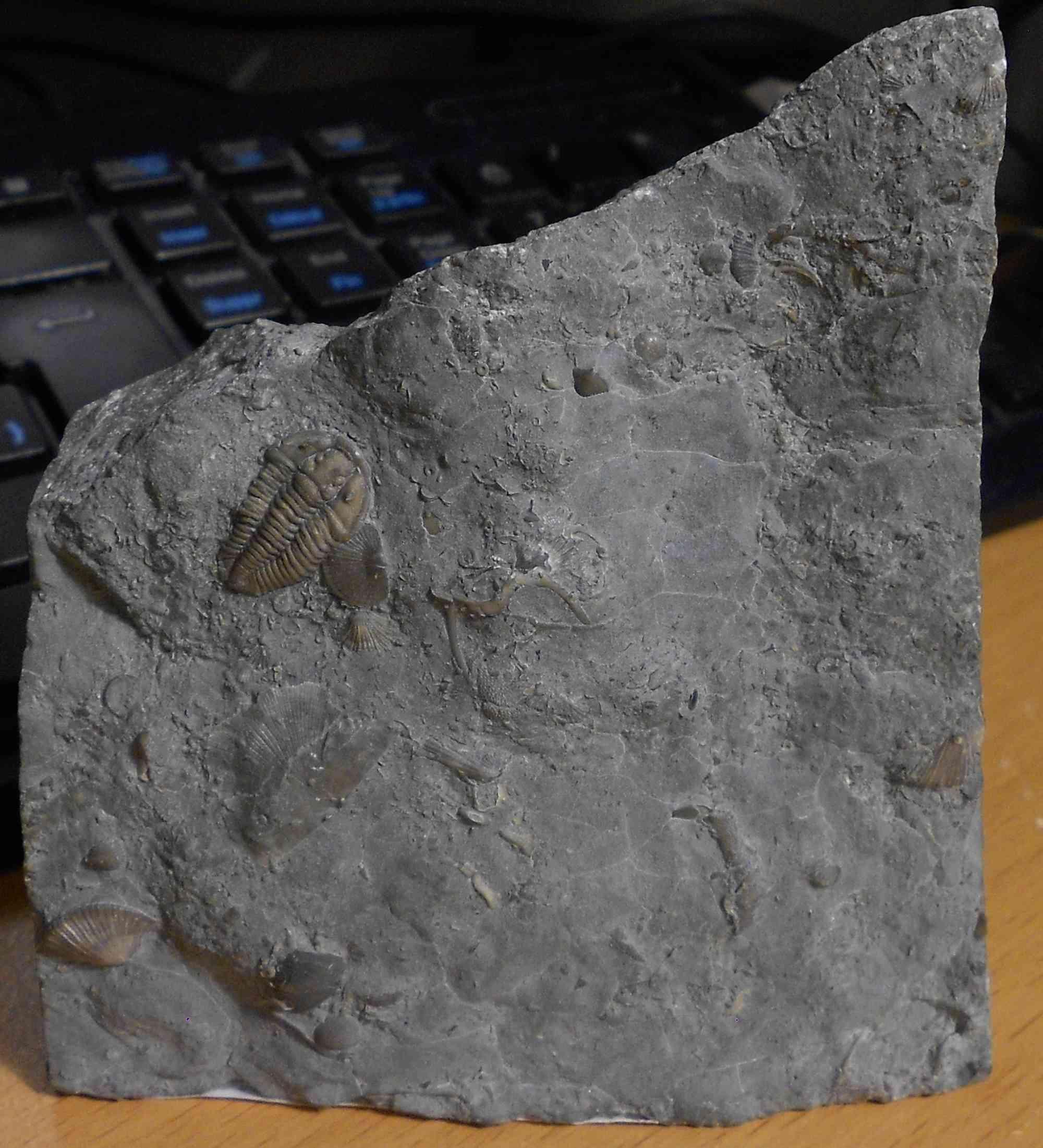 Les fossiles de Kueller Dscn4211
