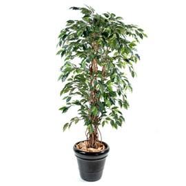 mes plantes.....ISA59 1115-710
