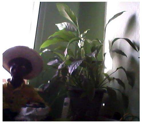 mes plantes.....ISA59 Image211
