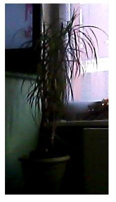 mes plantes.....ISA59 Image212