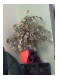 mes plantes.....ISA59 Image213
