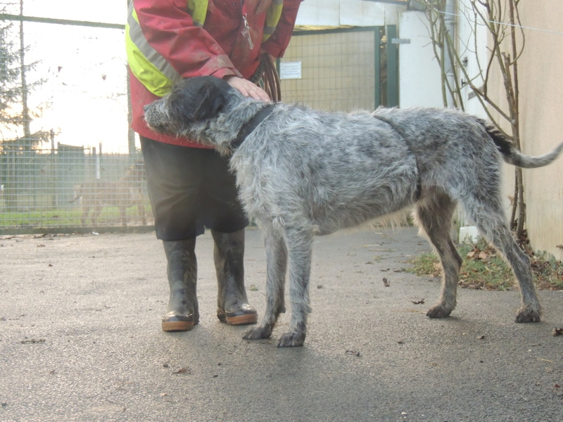 LILI - x griffon 6 ans blanc moucheté/noir- Refuge de la Picoterie à Crogis (02) Dimanc59