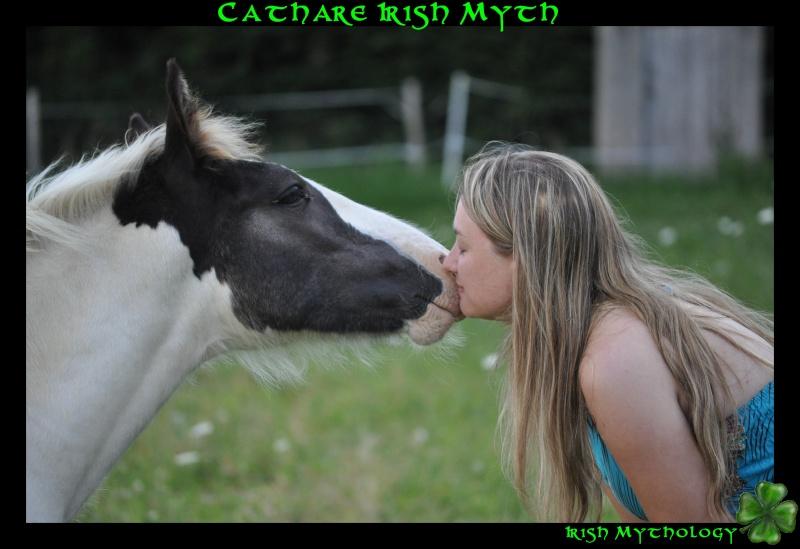 """Votez pour """"l'irish cob et les autres animaux"""" Cathar16"""