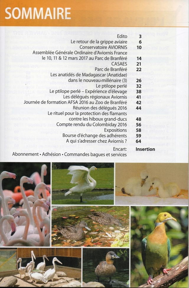 AVIORNIS FRANCE. - Page 5 Img51610