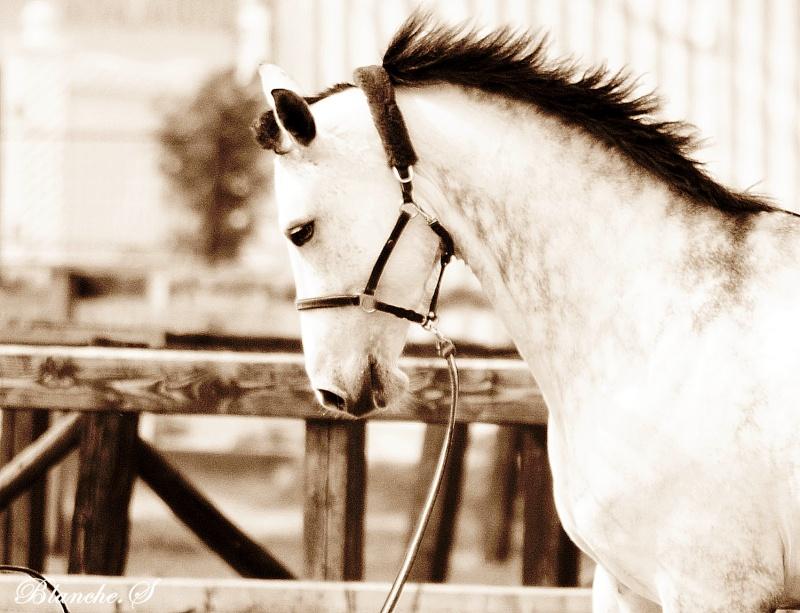 Propose de dessiner gratuitement vos chevaux !  Dsc_2610