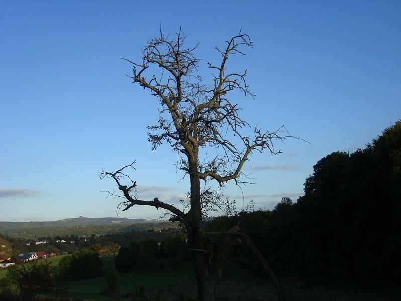 Fotoprojekt - Bäume - Seite 9 K-dsc041