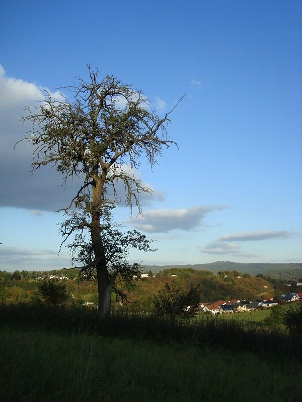 Fotoprojekt - Bäume - Seite 9 K-dsc042