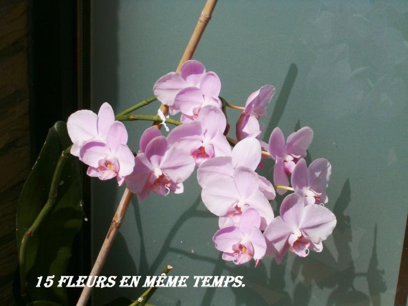 Phalaenopsis - Page 2 03_08_11