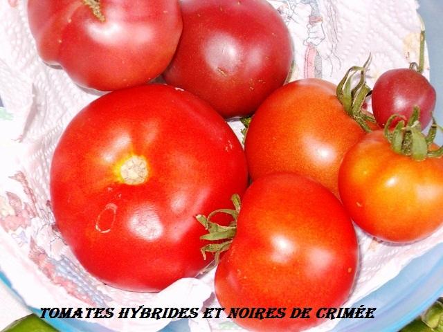 poivrons et tomates. 1_08_210