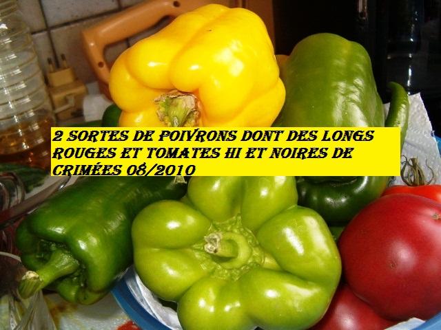 poivrons et tomates. 1_08_213