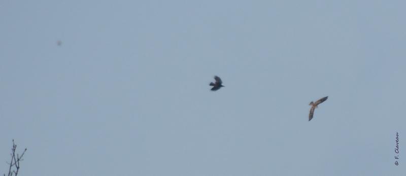 avez-vous une idée de quel oiseau il s'agit? Dscn8510