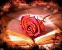 , je souhaite que tu prospères à tout point de vue et sois en bonne santé _4152725