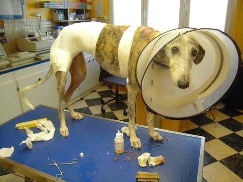 Visite vétérinaire (24 juillet 2010) - pas de photos choquantes - Bandy-27