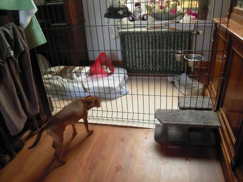 Aménagement (27 juillet 2010) Bandy-39