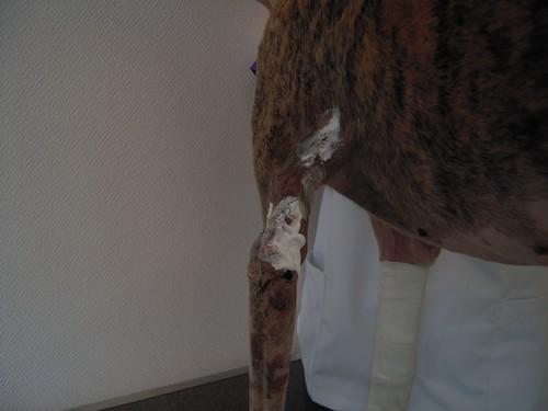 Suite des soins (31 juillet 2010) Bandy-54