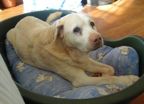 BELLE a pris un coup de vieux (10 juillet 2010) Belle-10