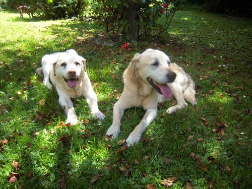VALENTIN et BELLE (4 juillet 2010) Belle-17
