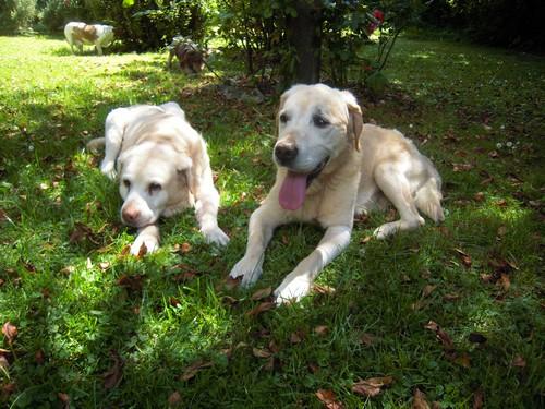 VALENTIN et BELLE (4 juillet 2010) Belle-18