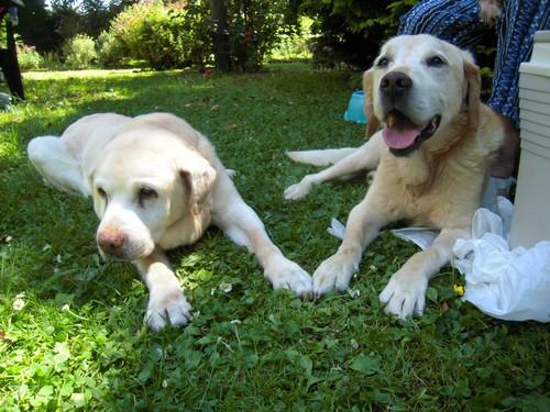 VALENTIN et BELLE (4 juillet 2010) Belle-22