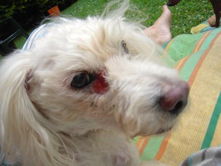 Visite vétérinaire (17 juillet 2010) Black-25