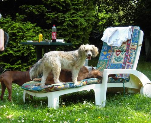 Confort d'été (27 juin 2010) Bouba-10