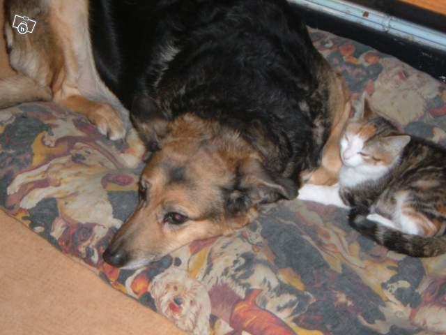 SOS pour une chienne de 11 ans !! propriétaire DECEDE Chienn10