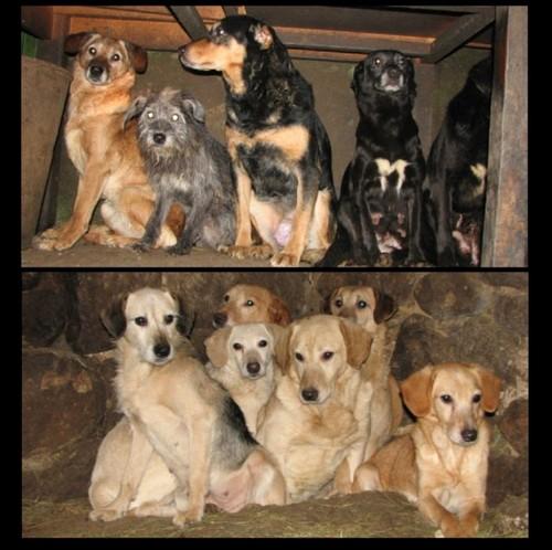 URGENTISSIME SVP !!!!! 11 chiens enfermés dans une cave (07) ardèche Chiens10