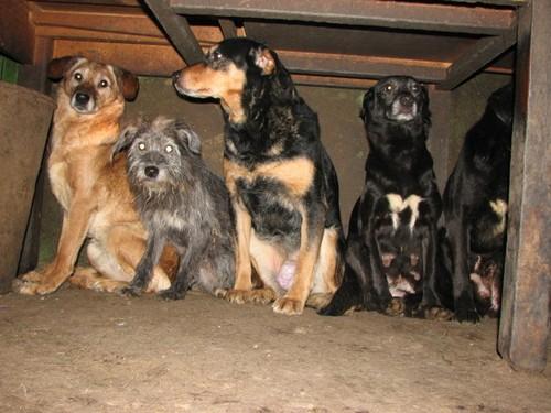 URGENTISSIME SVP !!!!! 11 chiens enfermés dans une cave (07) ardèche Chiens11