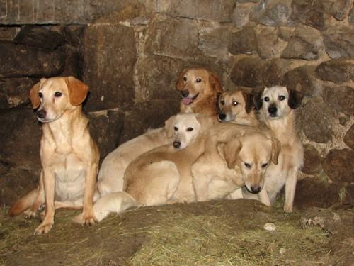 URGENTISSIME SVP !!!!! 11 chiens enfermés dans une cave (07) ardèche Chiens12